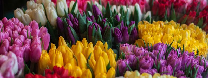 Köp hem galet mycket tulpaner. Alla vackra färger kommer göra dig lycklig.